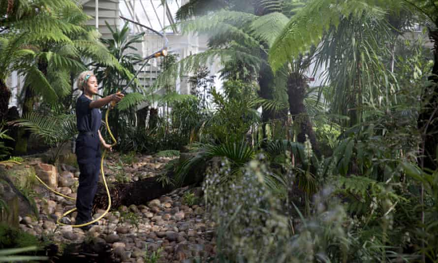A gardener waters some of the 10,000 new plants.