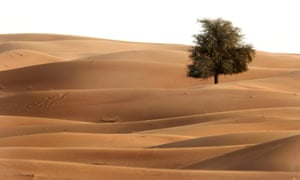 A lone tree stands in the dunes near Dubai, United Arab Emirates.