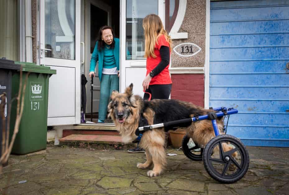 Natalie Tremlett walks Jacob for Janet