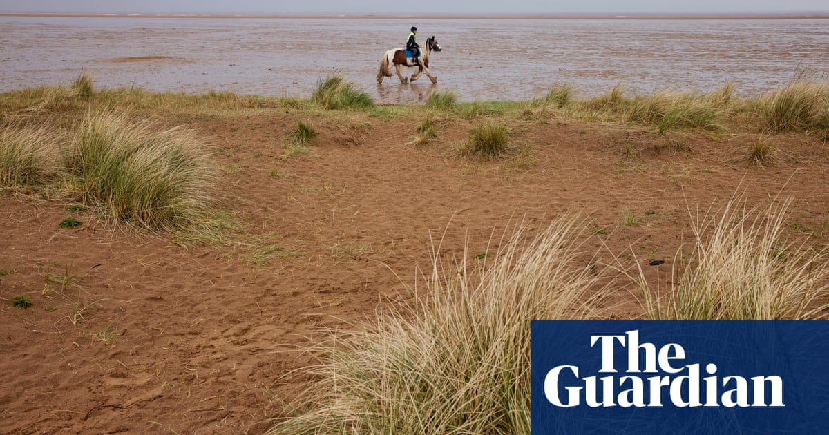 Hello hawthorn! £10m sand dunes project brings plants back to life