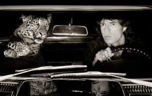 Mick Jagger in Car with Leopard, Los Angeles, 1992