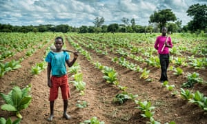 Dionetsetse Dickson (left), 14, and brother John Kennedy Dickson, 16, who have been working on the farm full-time for the past year
