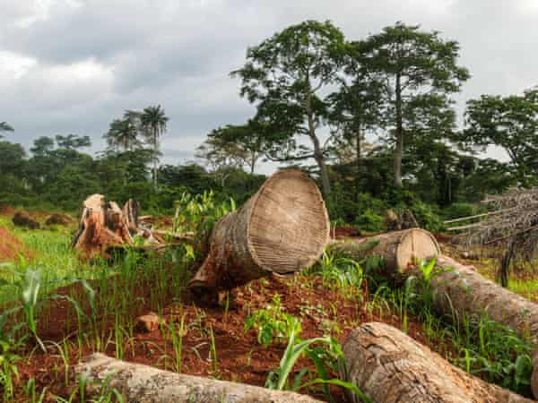 Evidence of deforestation in Mont Tia forest reserve, Ivory Coast.