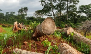 Deforestation for cocoa plantations in the Mont Tia forest reserve, Ivory Coast.