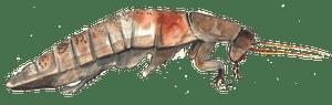 Bugs illustration