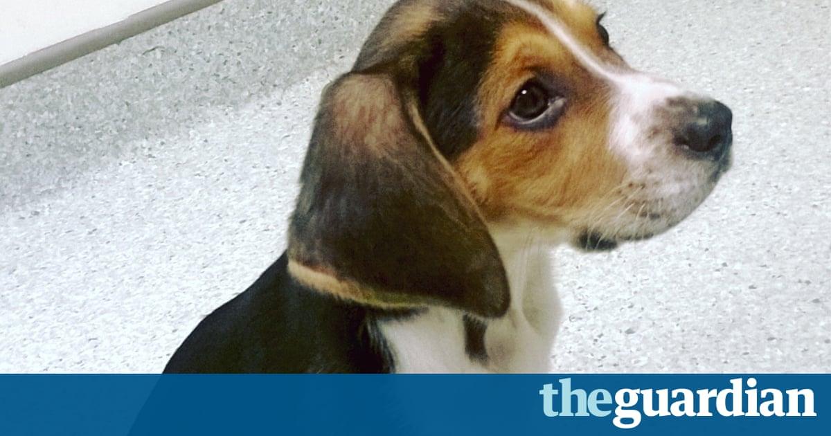 Puppy farming banned in Victoria