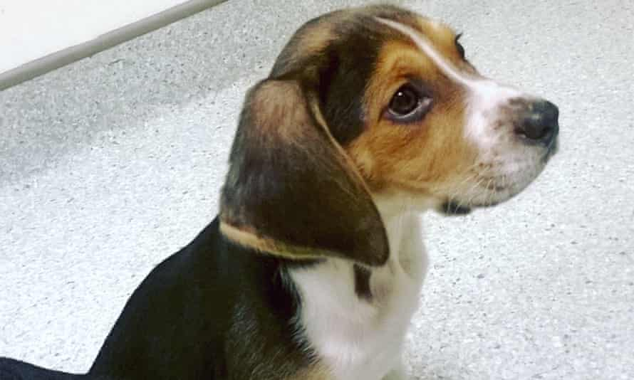 The practice of puppy farming has been banned in Victoria.