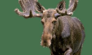 elizabeth bishop the moose analysis
