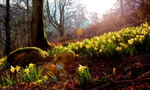 Wordsworth wrote his most famous poem 'The Daffodils' after seeing the flowers at Ullswater
