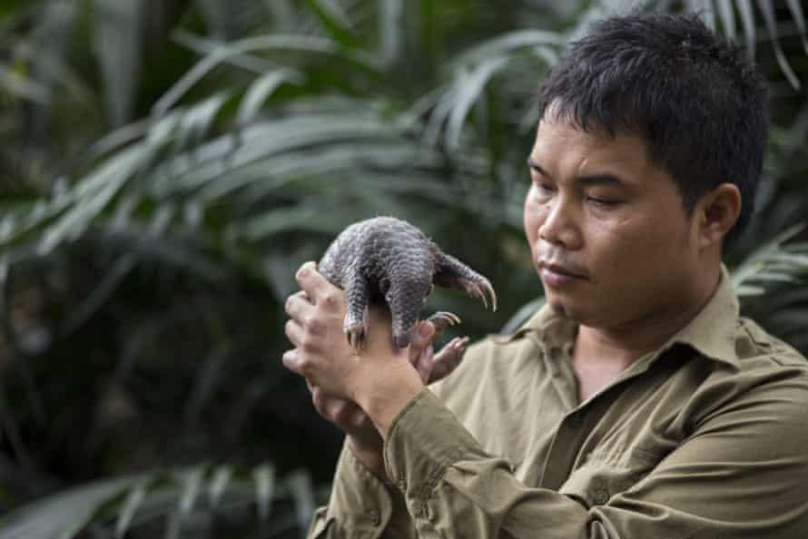 Thai Van Nguyen with a Sunda pangolin at Cuc Phuong National Park, Vietnam.