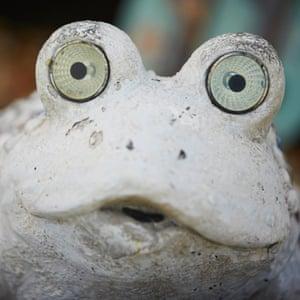 A frog in a caravan's front garden