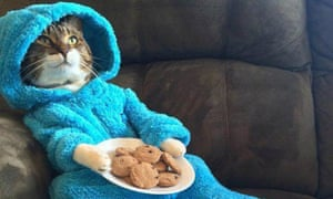 The US embassy in Canberra mistakenly sent out an invite including this photograph of a cat in a Cookie Monster outfit.