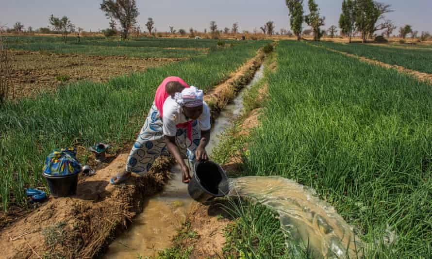 A woman waters her crop of spring onions with her baby on her back, near Bewani, Mali.