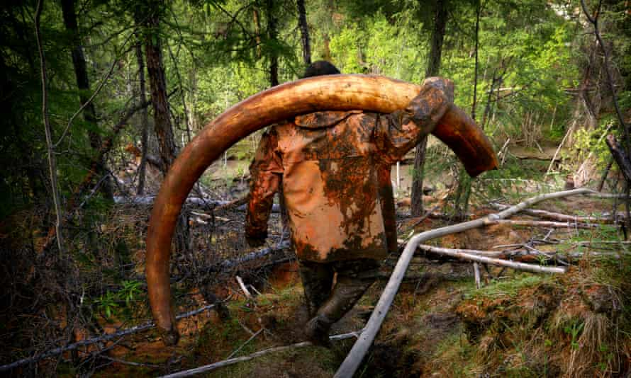 Local officials have warned that an outright ban on harvesting mammoth remains could disenfranchise locals.