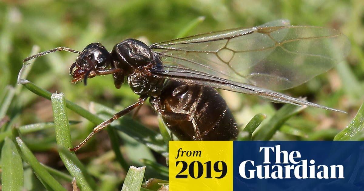 Vast Clouds Of Flying Ants Deceive Weather Satellites Environment The Guardian
