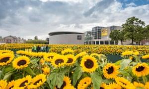 Sunflowers in the garden of the Van Gogh Museum, Amsterdam.