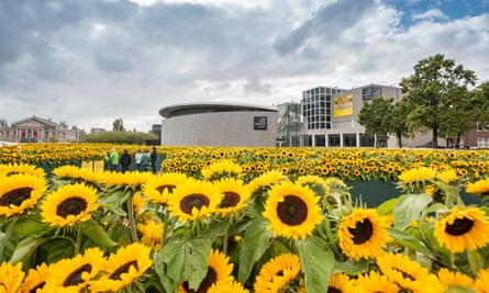 Sunflowers in the garden of the Van Gogh Museum, Amsterdam.
