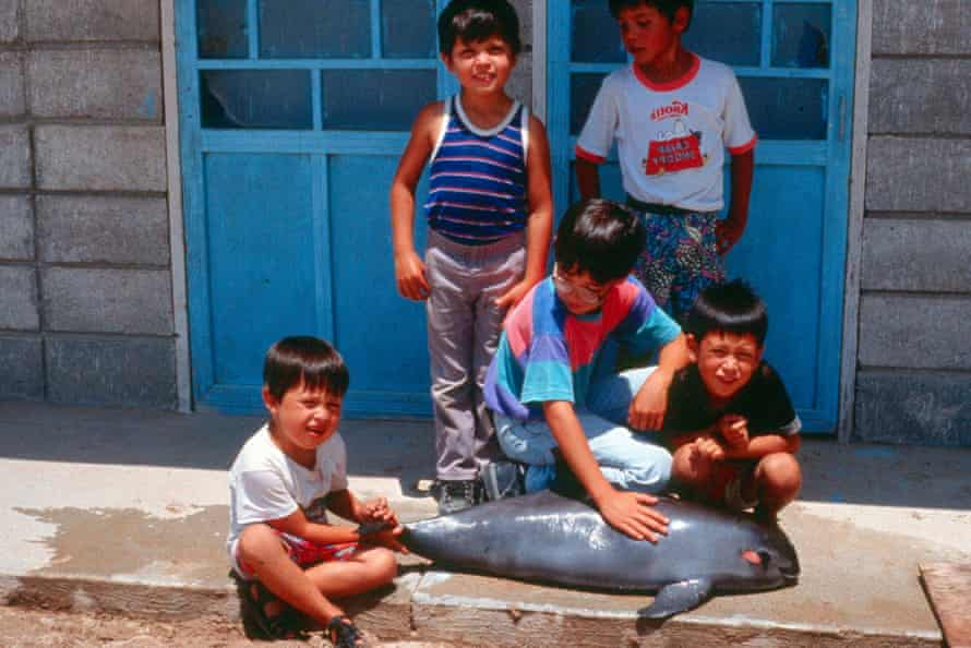 In this undated photo released by Proyecto Vaquita, children pose for a photograph next to a dead porpoise at the Gulf of California.