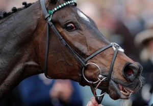 Altior in the winners enclosure after winning the Queen Mother Champion Chase