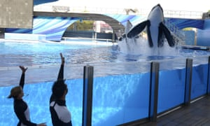 Tilikum, right, has been involved in the deaths of three people over the last 25 years.