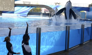Tilikum at a training session at SeaWorld in Orlando, Florida on 7 March 2011.