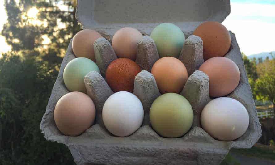 Apricot Lane Farms sells its grass-pastured, soy-free eggs to local health food stores such as Erewhon.