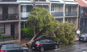 A tree has fallen across the entrance to a few terrace houses in Hargrave Street, Paddington