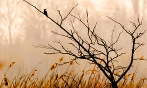 Bird silhouetted on a branch at London Wetland Centre.