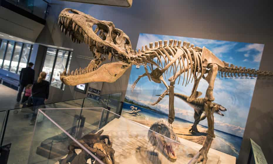 A full skeletal replica of the carnivore Lythronax argestes on display Natural History Museum of Utah in Salt Lake City. The fossils were found in the Grand Staircase-Escalante national monument.