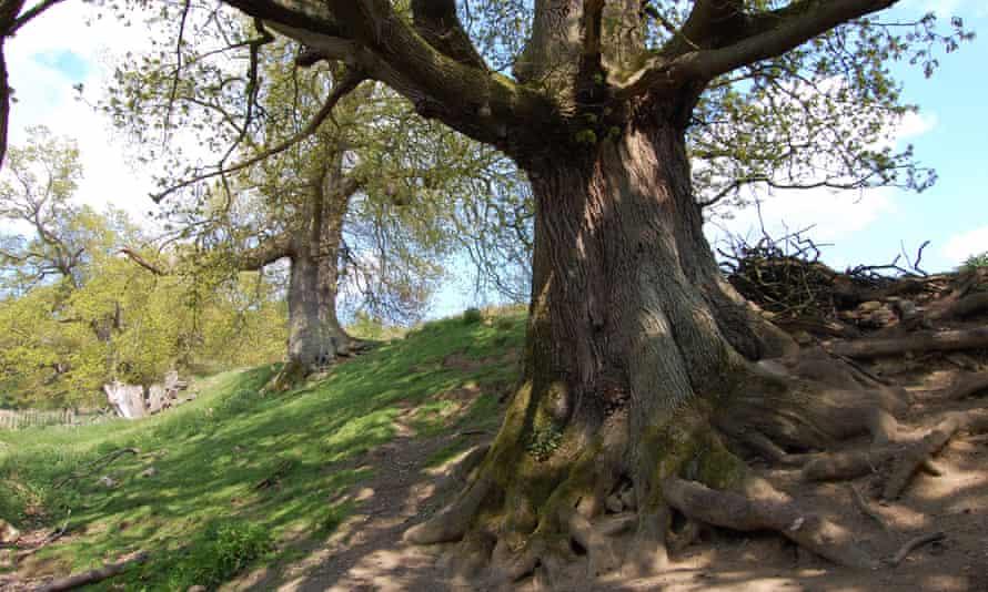 Trees on Offa's Dyke near Chirk, Wrexham