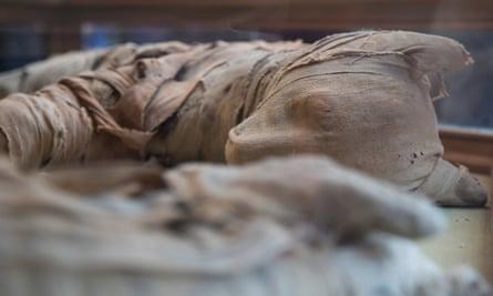 A mummified lion