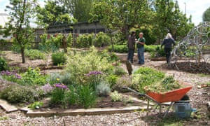 A garden in the process of being cultivated