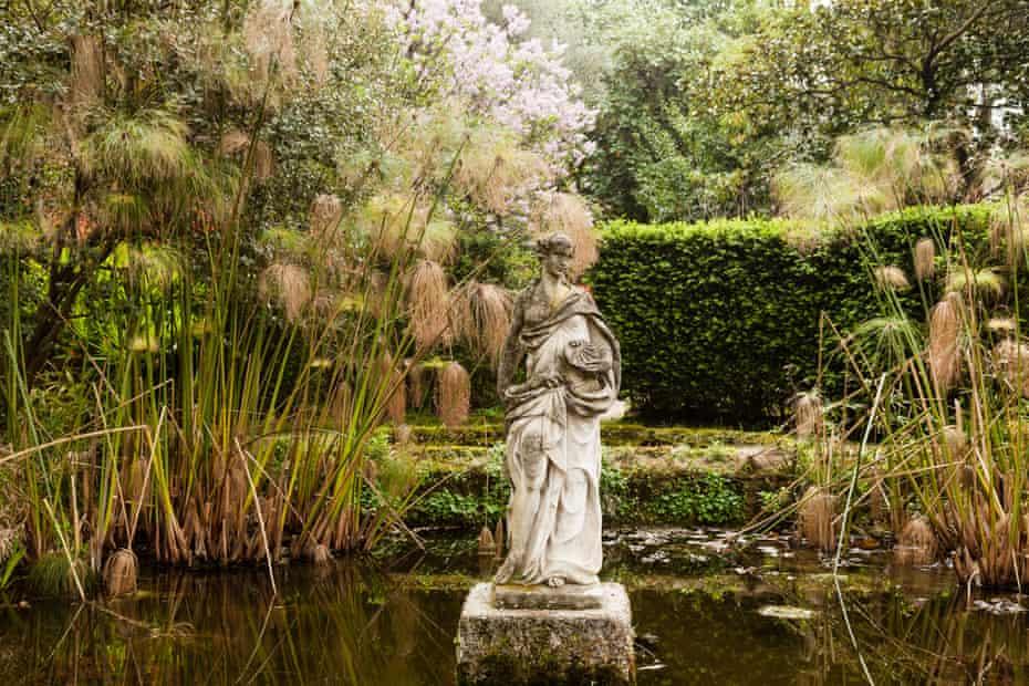 France, Menton, Serre de la Madone garden, nymph in the pond and Cyperus papyrus.