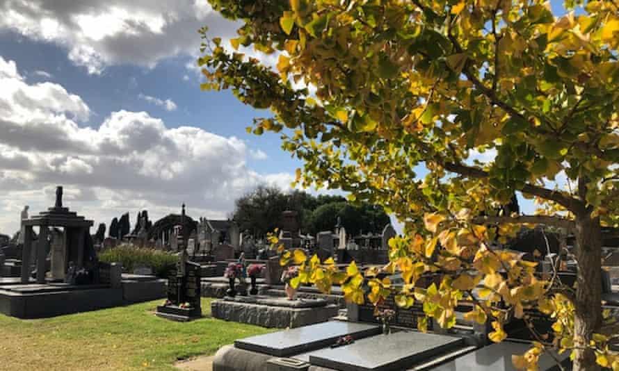 Graves, graveyard, autumn tree