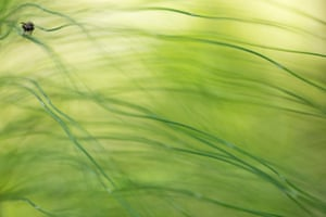 Other animals, second place: Sebastian Vogel, 'Hidden in the horsetail grass' (fly)