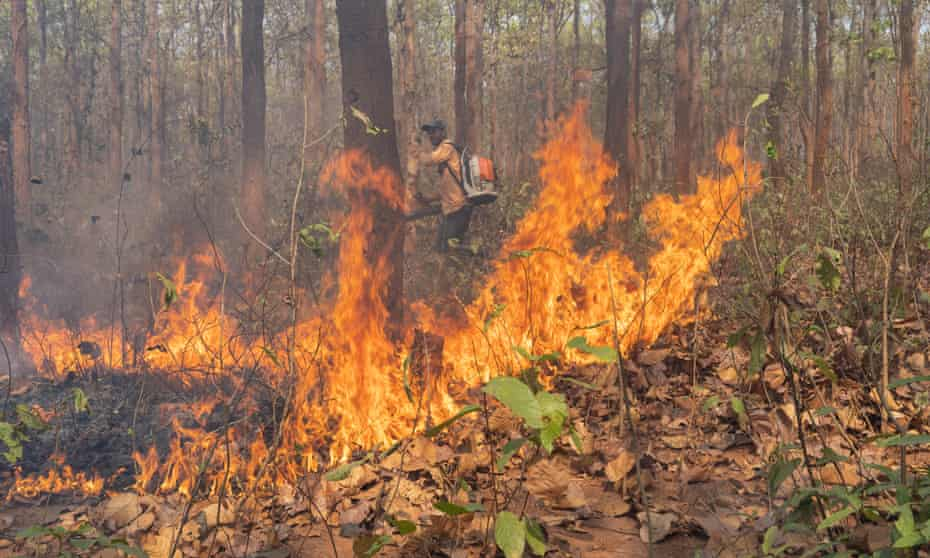 A worker uses a leafblower in an attempt to stop a fire spreading in Similipal national park, Odisha, India.