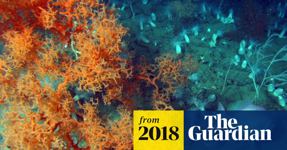The 'great dying': rapid warming caused largest extinction event ever, report says