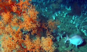 coral on seabed