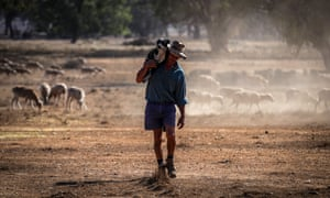 A sheep farm in New South Wales. The drought across the Murray Darling Basin is now officially Australia's worst on record.