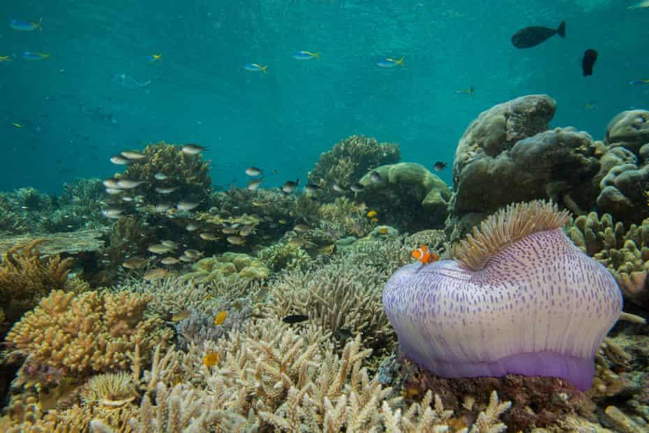 Pristine coral reef in West Papua, Indonesia