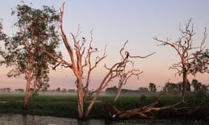 Yellow Water Billabong at Kakadu national park