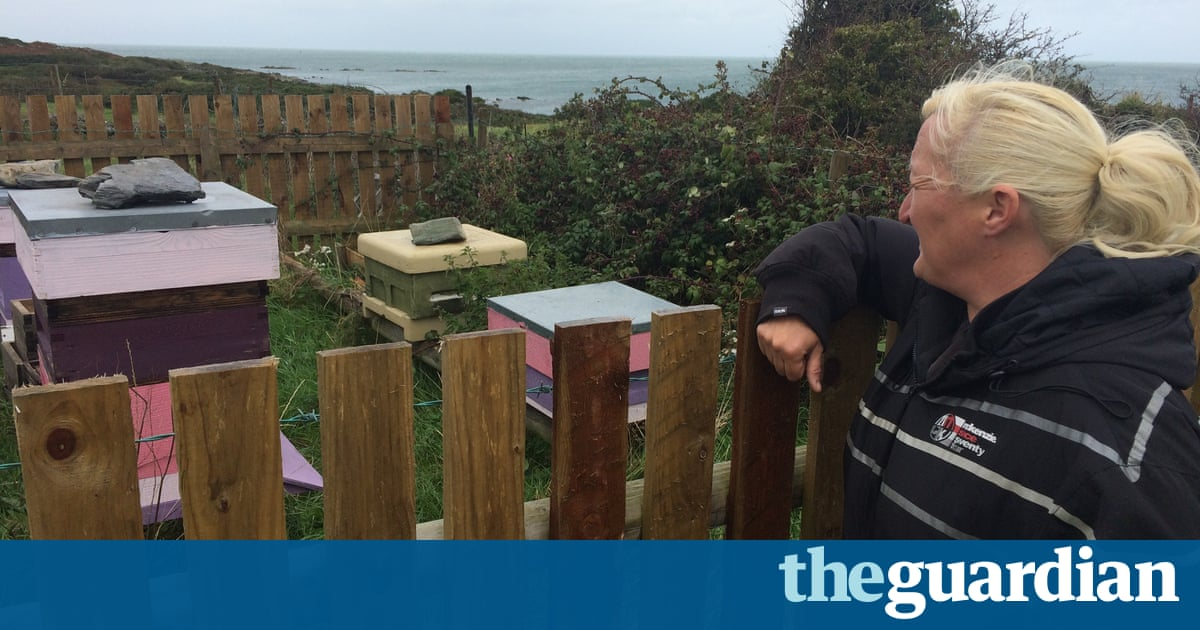 From North Wales to Norfolk, Distraught Beekeepers Ask: Who's Stealing Our Hives?