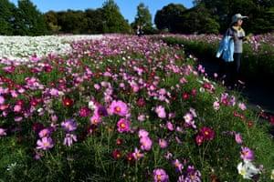Hamamatsu, Japan A woman walks among flowers in Hamanako Garden Park