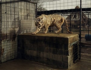White Tiger … Simon's photography combines deep research and a detached documentary approach.