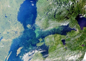 Blue-green algal blooms in the Baltic Sea in 2018.