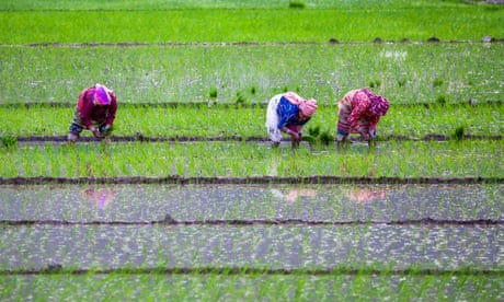 Rice-planting season in Lalitpur, Nepal.