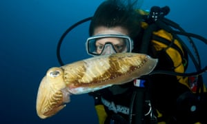 Scuba diver with cuttlefish
