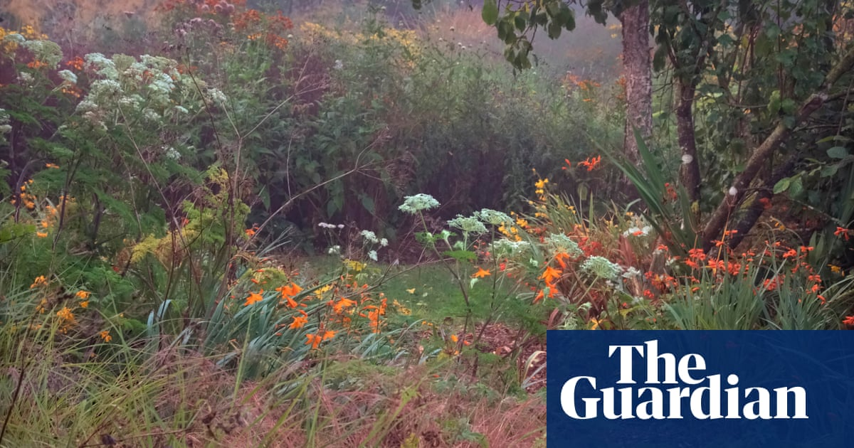 Gardens: repairing summer's damage | Life and style | The Guardian