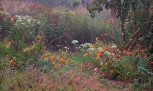 A wild area at Holbrook Garden, Devon