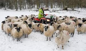 Hill farmer Bobby Lennox